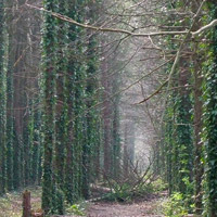 Counselling images: forest