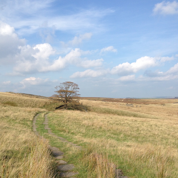 Counselling images: moor path